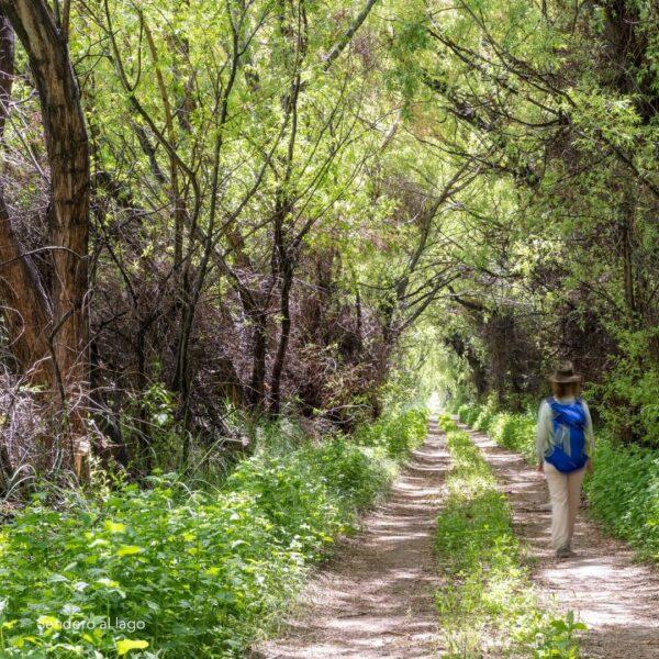 Trail to Lake Buenos Aires - La Ascensión, Patagonia National Park Argentina. (Credit: Fundación Flora y Fauna Argentina)